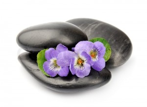 6784930-violets-flowers